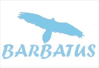 BARBATUS